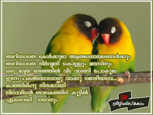 Quotes About Love Birds : Funny Pictures Gallery: quotes birds, bird quotes.