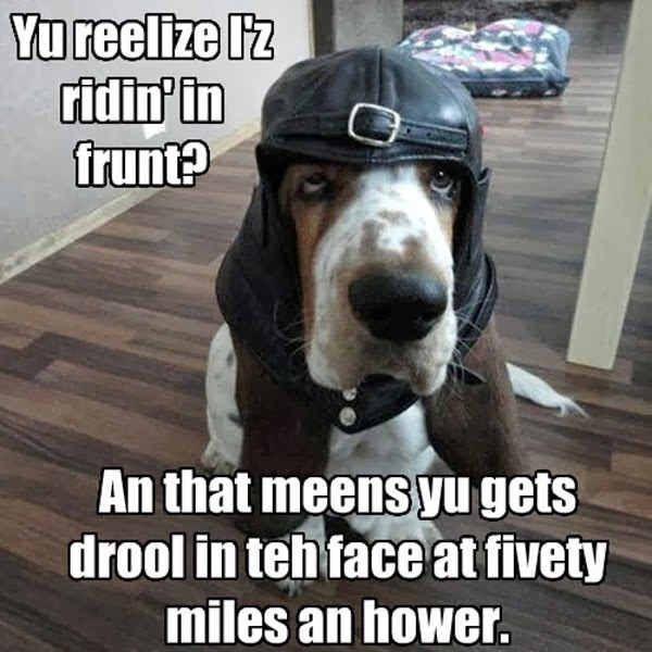 Funny dog pictures of dog wearing flying hat