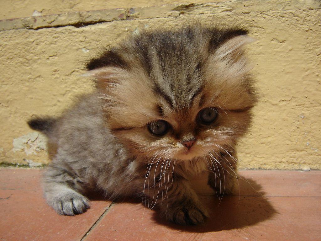 20. Kitty