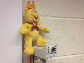 Pom Bear checking the CCTV Cameras