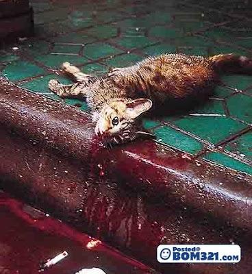 Kucing Di Bunuh Dan Dimakan (18+)