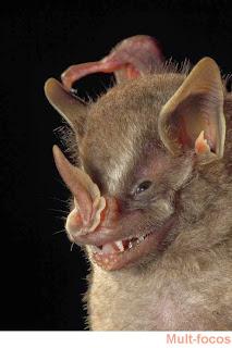 morcego folha