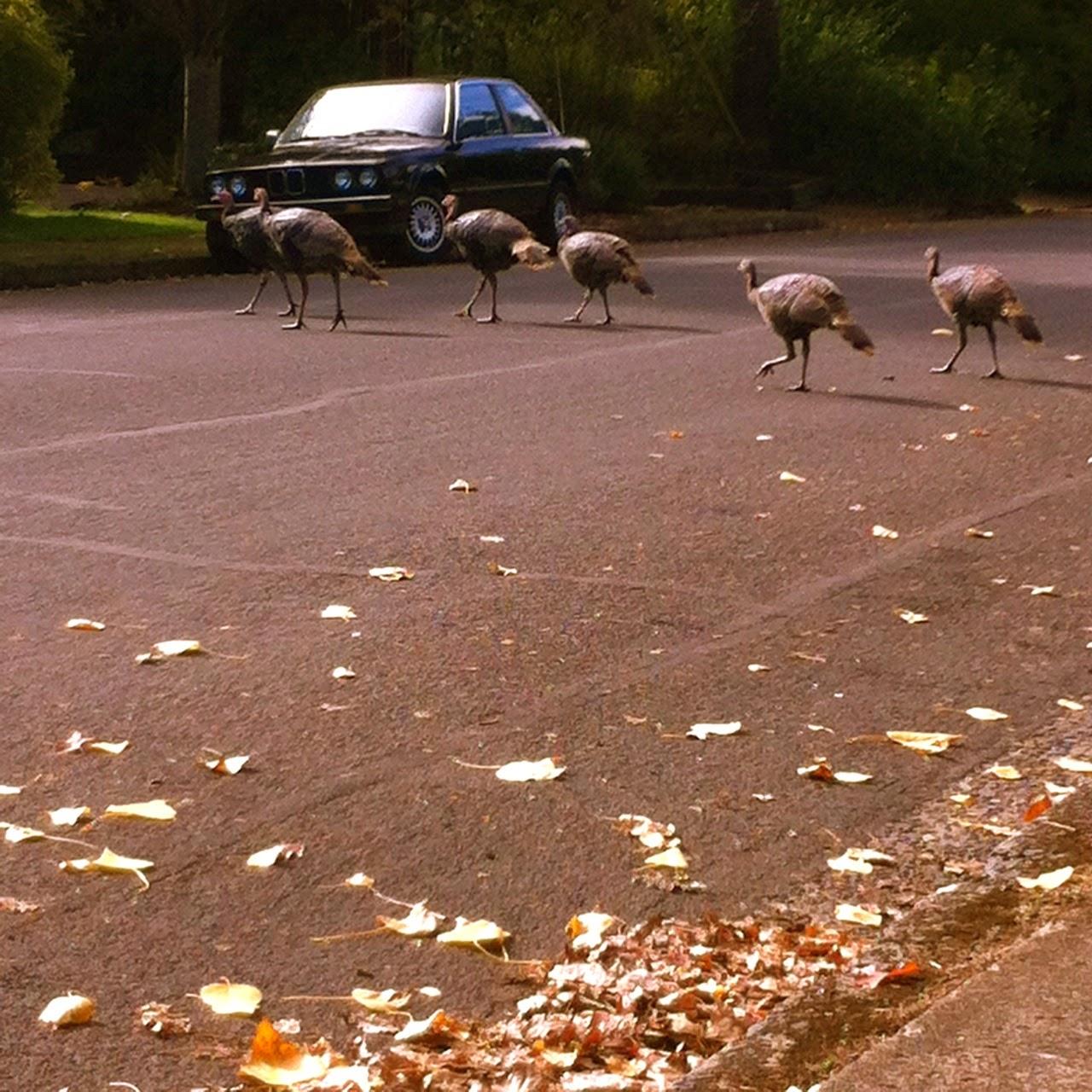Eugene, oregon, autumn, fall, Under The Plum Blossom Tree, birds, BMW 325