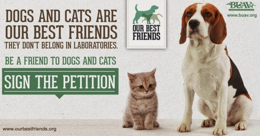 animals our best friend essay Write a sentence that states the reason for your paper for example: everyone should spay or neuter their pets this statement will go in the first box in your flow chart.