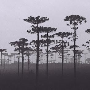 Mangueirinha, Paraná
