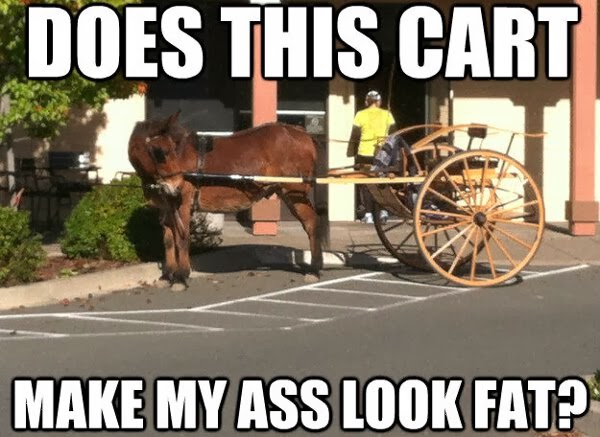 30 Funny animal captions - part 19 (30 pics), donkey picture, does this cart make my ass look fat