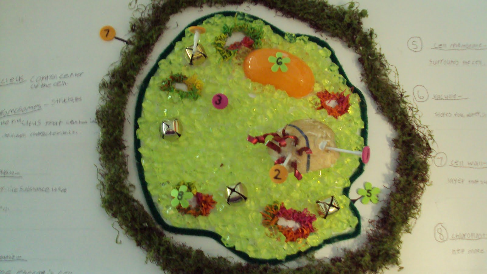 Animal Cell Model Diagram Project Parts Structure Labeled Coloring And Plant Organelles Cake