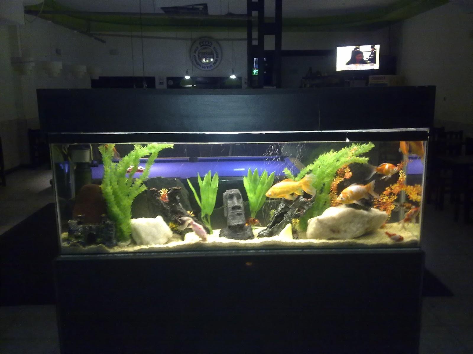 Acuarios decorpez pecera decoratva charly - Decoracion para acuarios ...