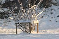 Punaherukka talvitunnelmissa