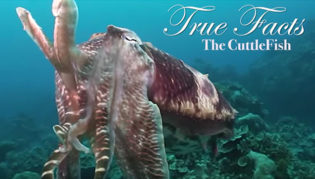 True Facts About The CuttleFish by zefrank1.
