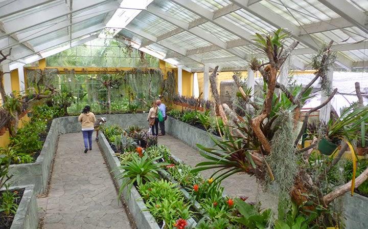 El jard n bot nico de bogot es un para so everde for Jardin botanico bogota