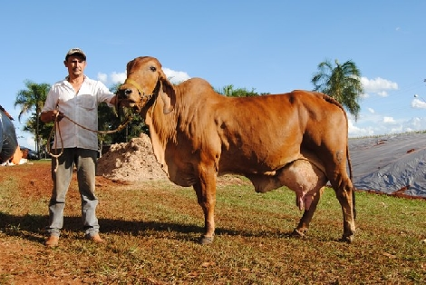 Dairy Cow Breeds