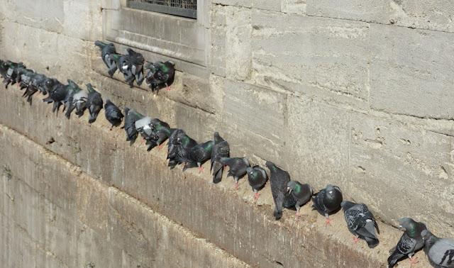 Yeni Camii Pigeons Istanbul