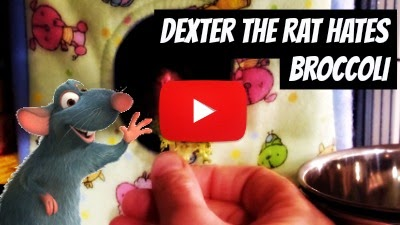 Watch Dexter the rat who hates Broccoli just like other Broccoli hates but in a adorable way via geniushowto.blogspot.com adorable cute pet videos