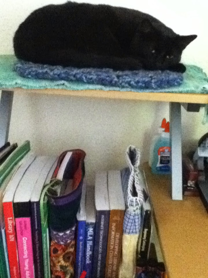My black cat Starfire curls in a ball, her head gazing toward photographer, on a shelf padded with towel and small afghan. Books are shelved on the lower shelf that Starfire's shelf is attached to. Their spines display various titles related to library work.