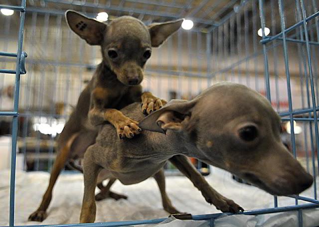 Фото Укринформ:любовь собак