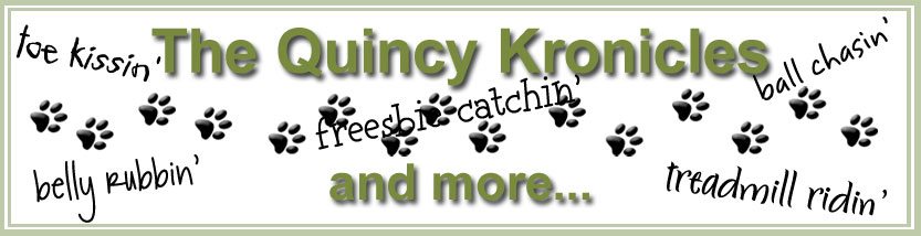 The Quincy Kronicles and More...