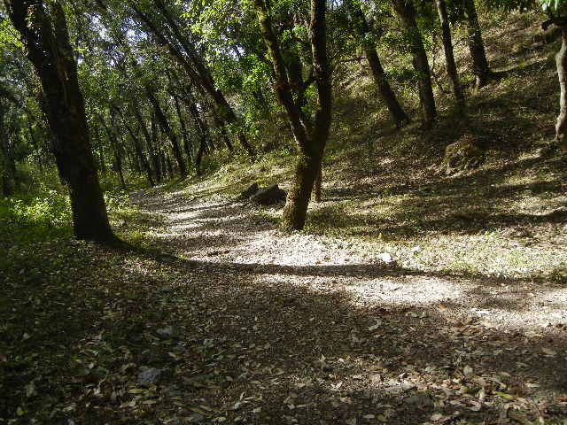 Walk through forest in Bhimtal, Uttarakhand
