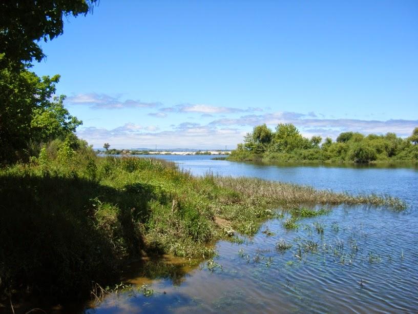 Rio Tejo visto da Praia Doce com ervas