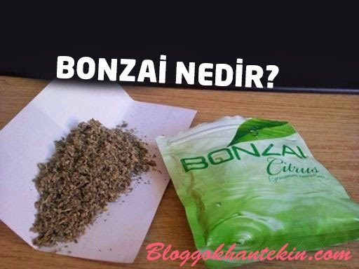 Bonzai Ölüm Meleği
