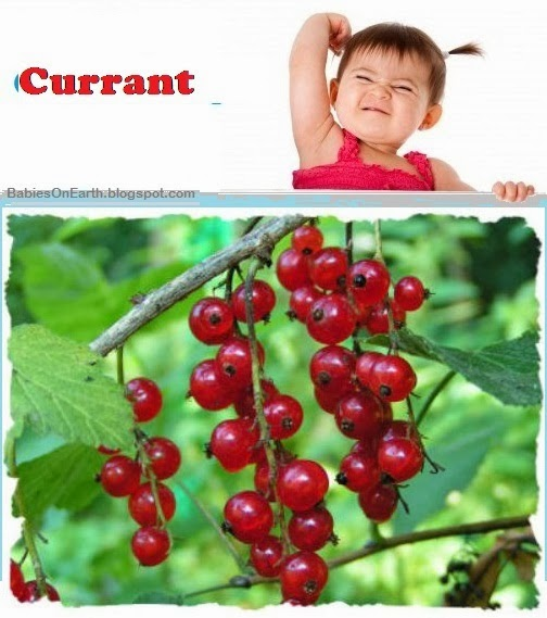 Baby Currant