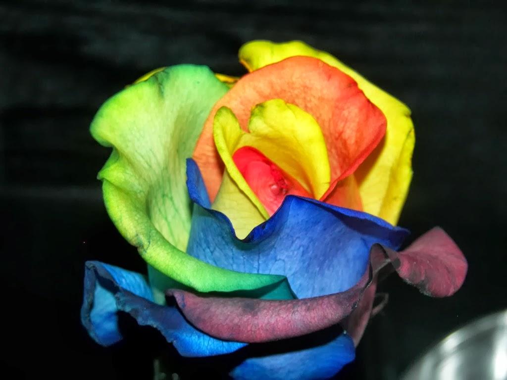 rainbow flower background - photo #30
