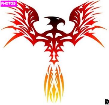 Pictures Of Tribal Phoenix Tattoo Designs Color Kidskunst Info