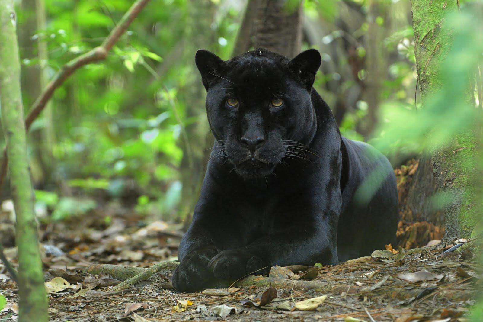 Joven postea en Facebook imagen de jaguar que cazó, al