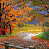 Colorful Trees in the Forest Landscape wallpapers