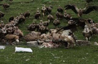 Pemakaman Langit Jadikan Jenazah Santapan Burung