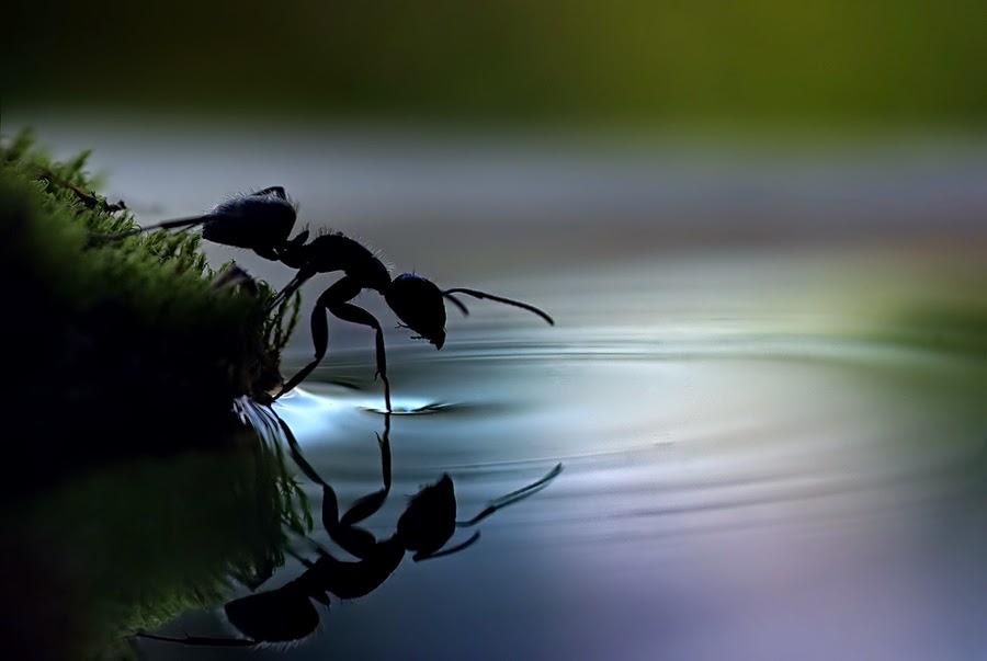 Продолжение сказки о муравье