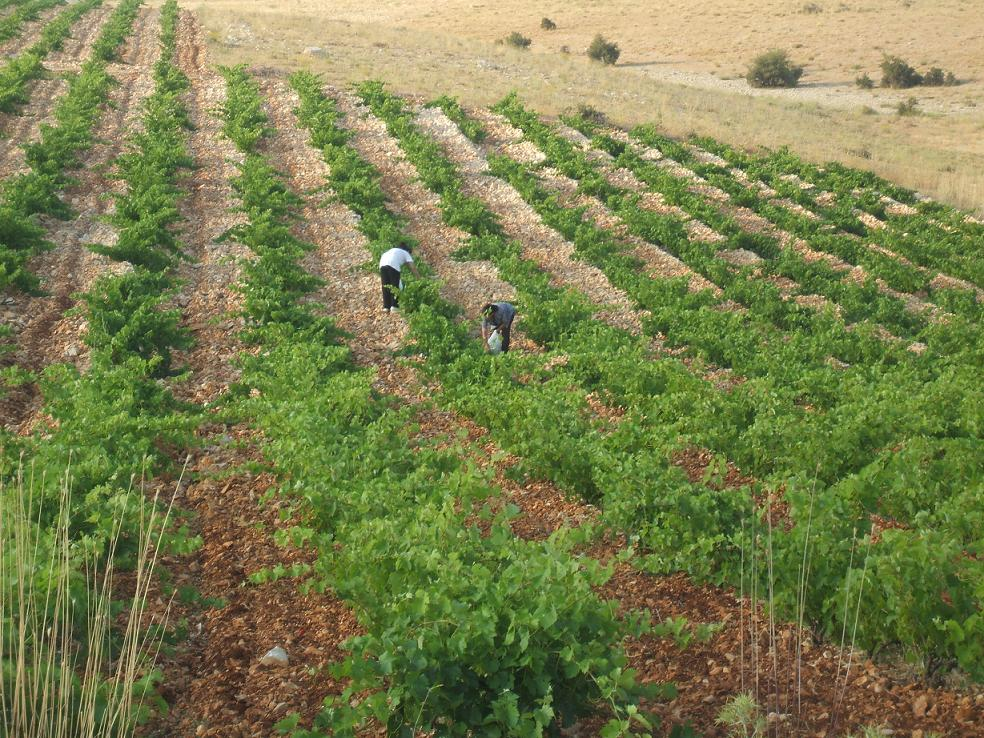 agriculture in lebanon Lebanon's moderate climate, rich soil, and abundant water resources provide it with key enablers to stand out in the region as an ideal location for agricultural.