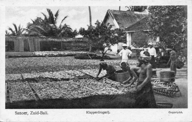 Drying Coconuts - Sanur - Bali ca.1920's