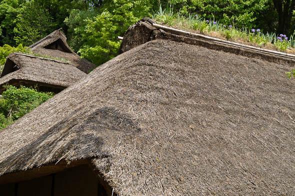 les iris qui poussent sur le toit des minka au japon. Black Bedroom Furniture Sets. Home Design Ideas