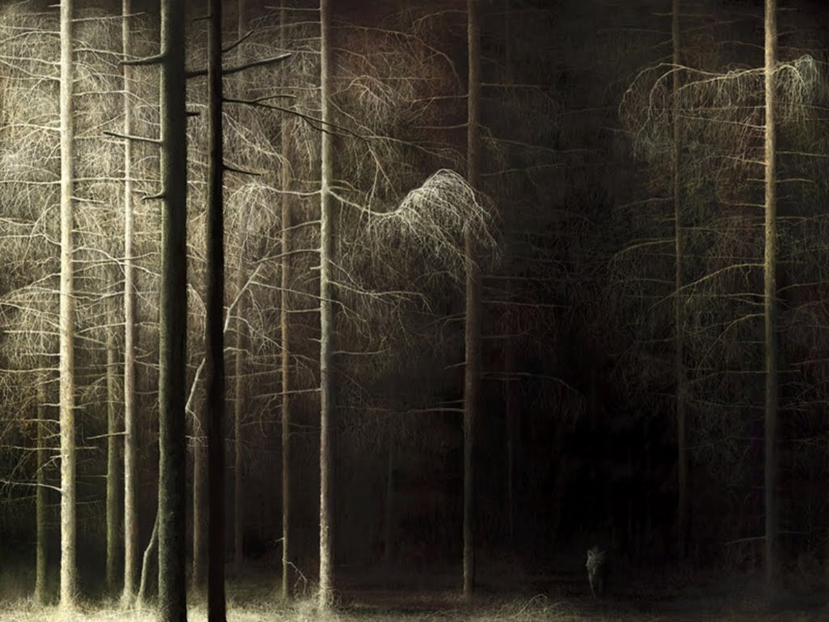 Dark Forests | Walls Hub