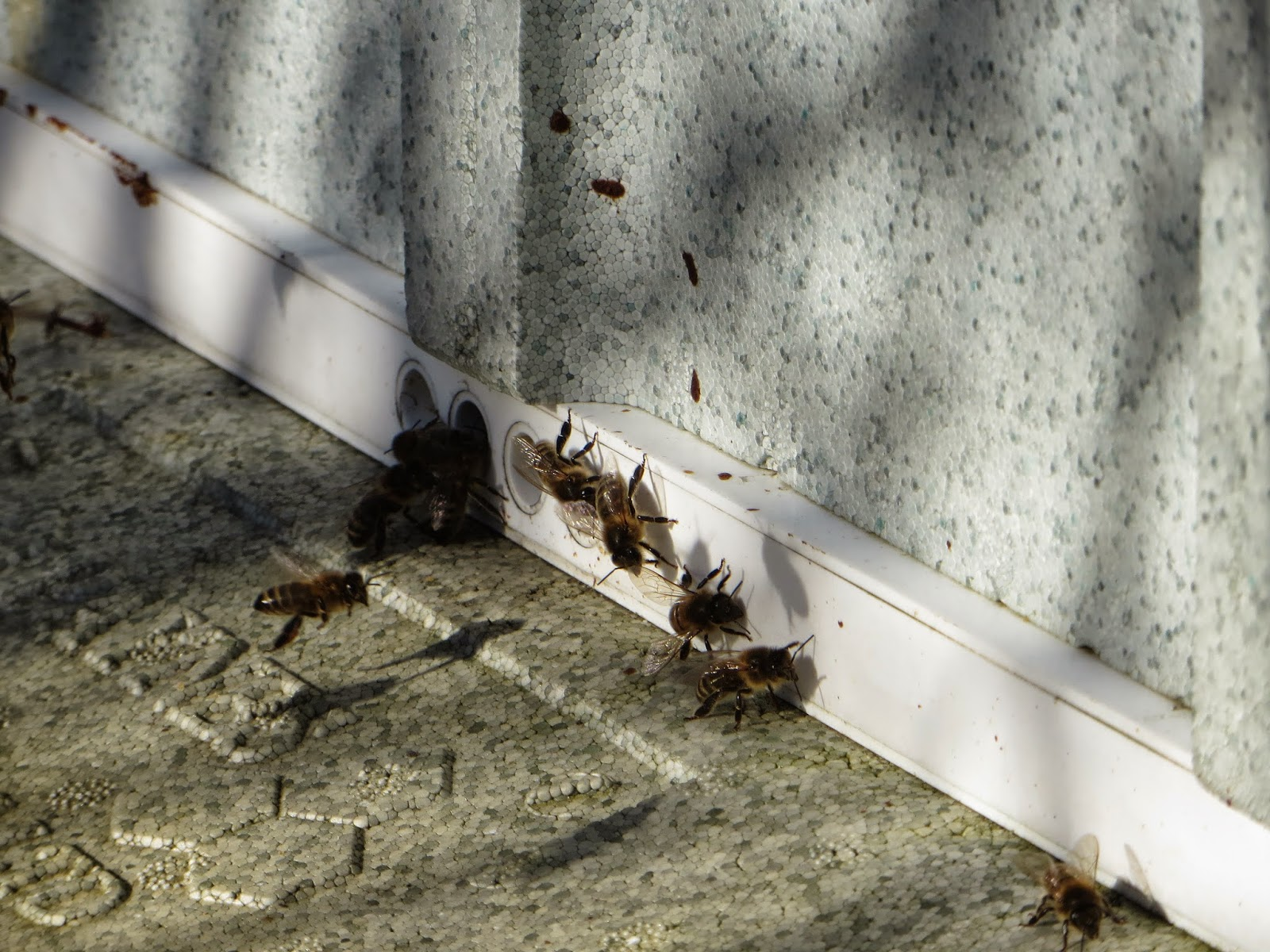bees on winbter flights