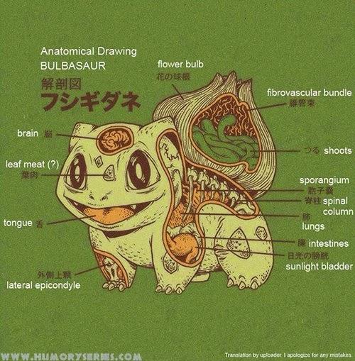 Anatomía Pokemon: Charmander, Bulbasaur, Squirtle y Pikachu | Humor ...