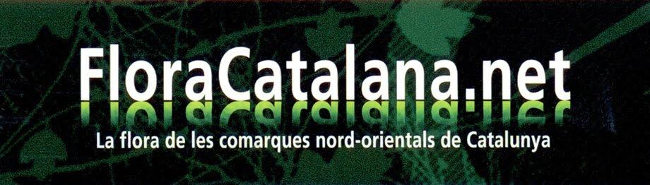 GALERIA D'INVERTEBRATS