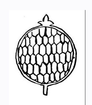 Red Pomegranate Seeds Coloring Pages Picture