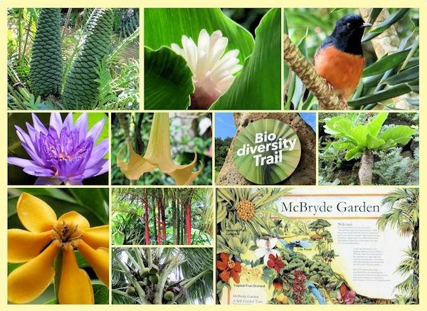 McBryde Botanical Gardens U0026 Preserve, Kauai