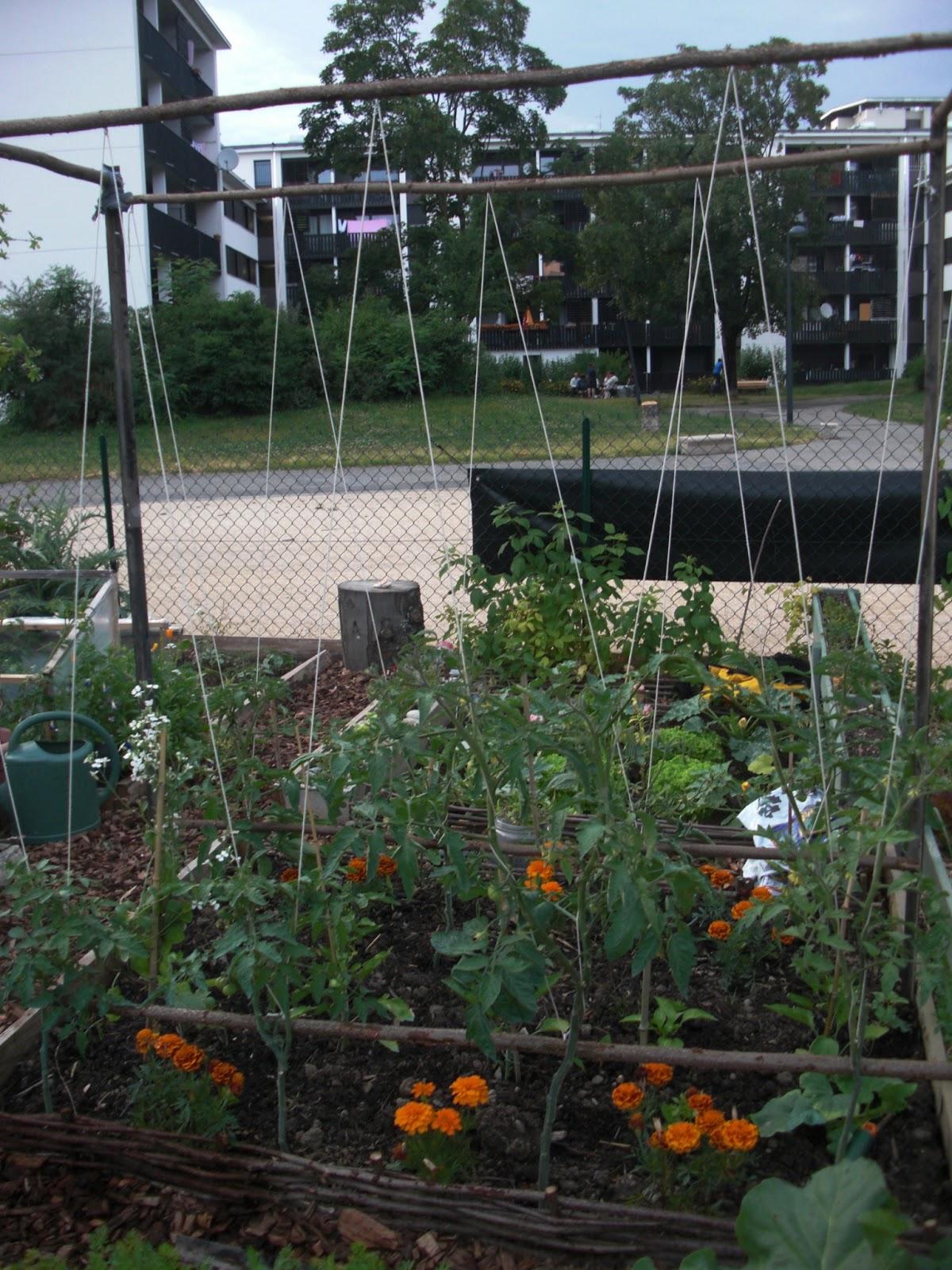 Un Jardin Olympique Tuteurs D 39 Un Nouveau Genre