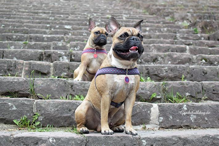Hundeblog - Genkibulldog, Abenteuer einer französischen Bulldogge