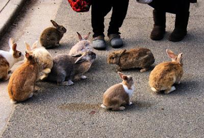 pulau kelinci