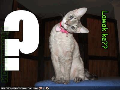 kucing cute comel cat