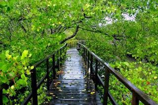 Ekowisata Hutan Mangrove