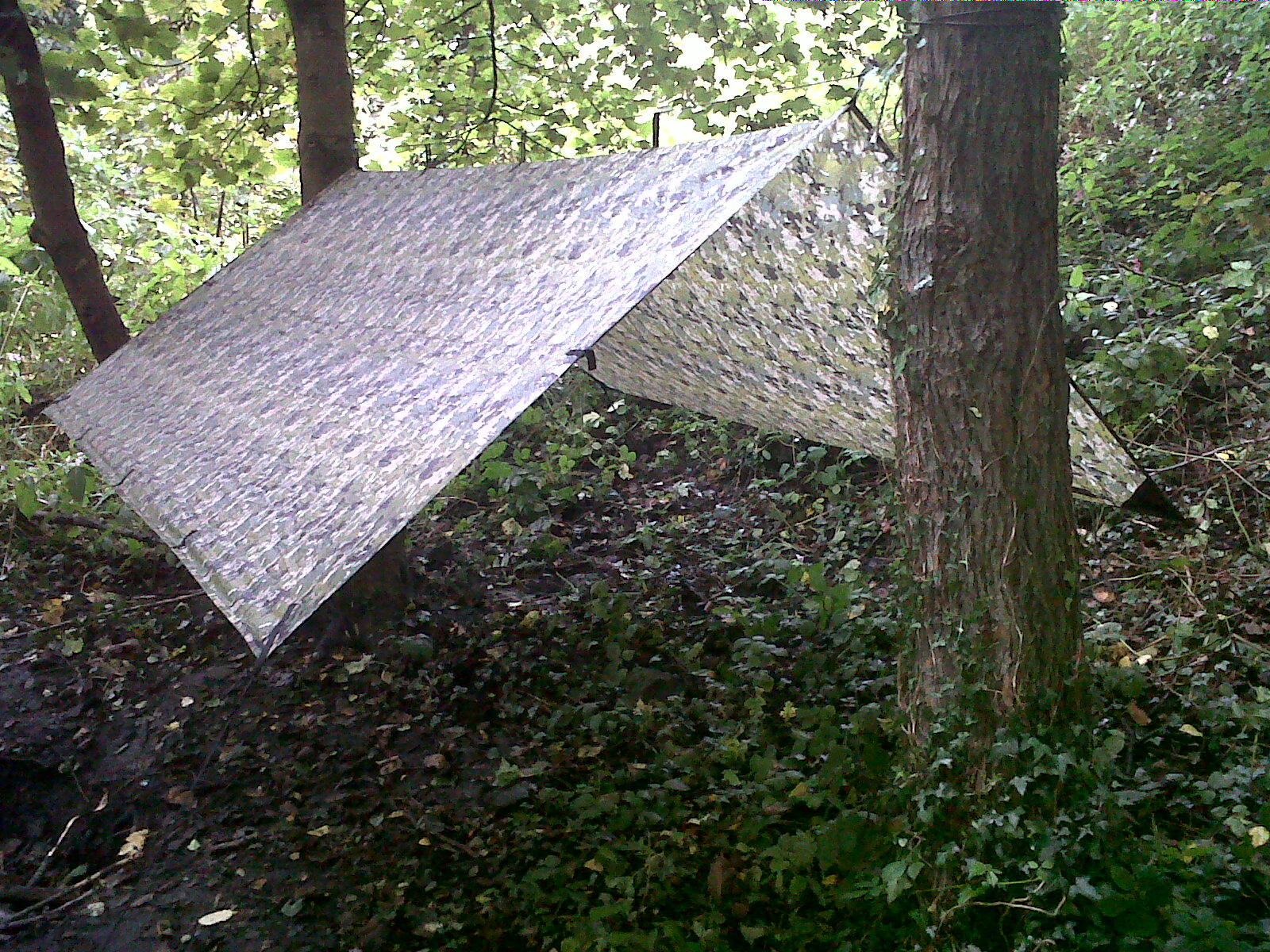 Backyard Hammock Setup : My Hammock setup is a DD 3x3m Tarp and a DD Camping Hammock