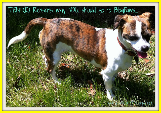 10 Reasons why you should go to #BlogPaws