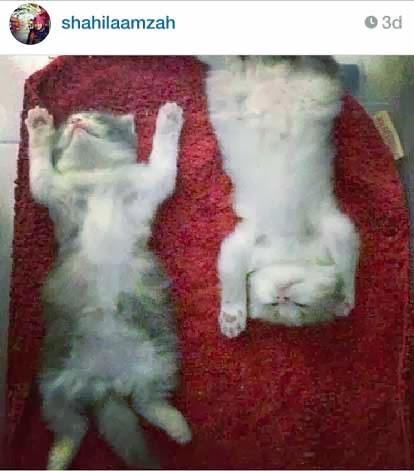 Shila Amzah & Hanis Zalikha Sedang Kemaruk Kucing