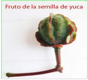 Promoción de Fruto De Papel De Pared - Compra Fruto