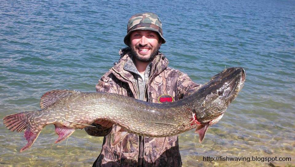 Fish waving lago di campotosto dalla riva big fish for Grosso pesce di lago